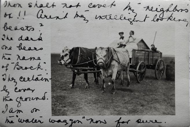 CALHOUN KATHLEEN 1911 Prairie Oxcart